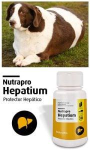 hepatium-draw