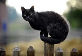 gato-viejo-70