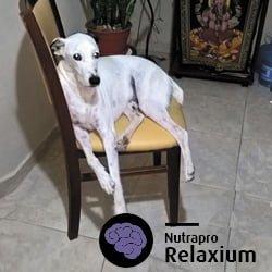 relaxium-nota
