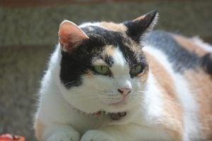 fat-cat-1391358_1920-1024x683
